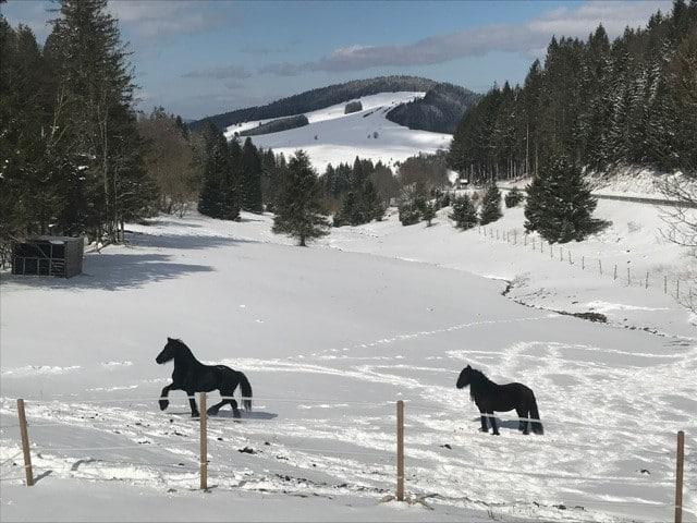 Pferde_IMG_6144